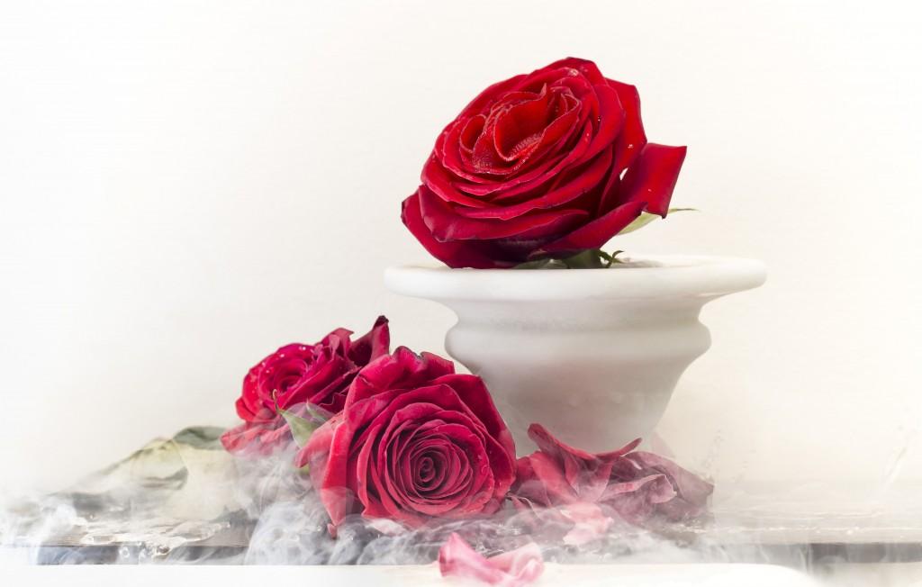 Sublimotion Rose I