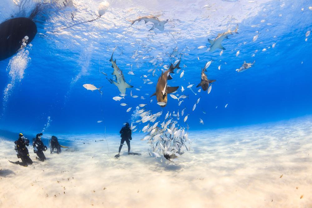 Plongée Bahamas